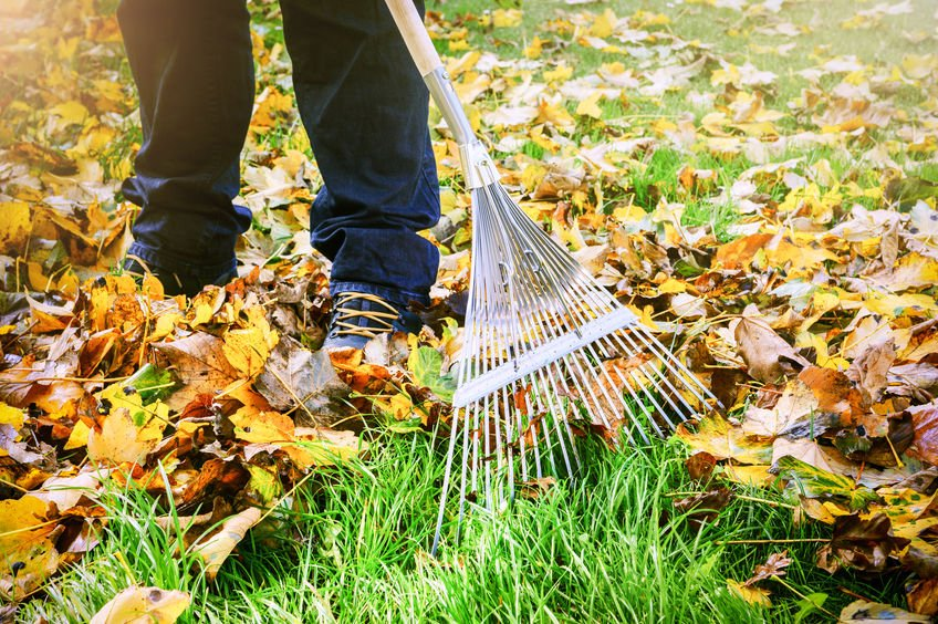 Taking the Pain Out of Raking